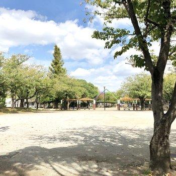 向かいの公園。広いですよ〜