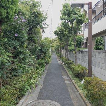 緑が豊か。お散歩ルートに良さそうだワン!