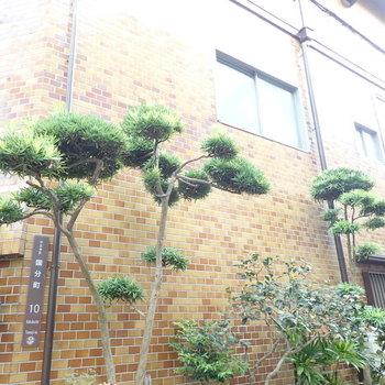 松の木が風情を添えます。