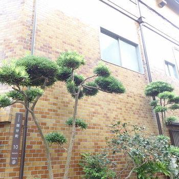 松の木が趣あります。