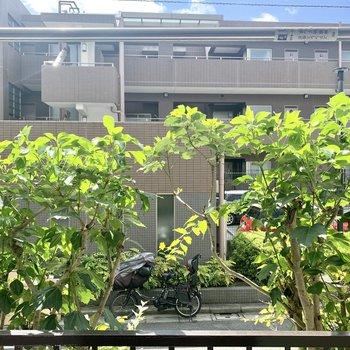 きれいな緑の生垣が通りの視線をやわらげてくれます。