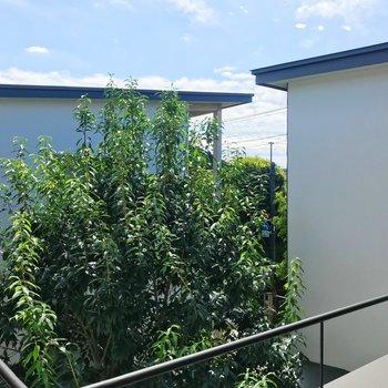 【上階】バルコニーからの景色。緑と青空〜!