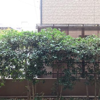 建物との間には柵と植栽。見た目もいいし、防犯面も安心ですね。
