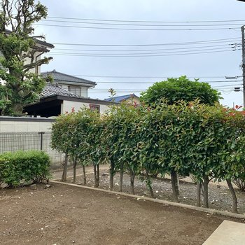 木々の向こう側は敷地内の通路になっています。