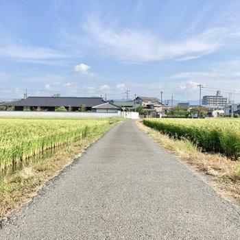 駅までの道は、のどかな風景が続きます。