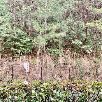 眺望は茂み。道路を挟んでいますが交通量は少なそう。