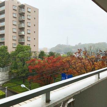 葉が色ずく季節ですなぁ〜。