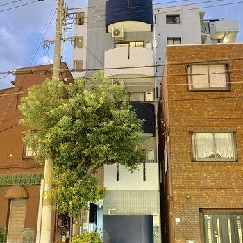 縦にシュッとした真ん中のマンション、こちらの最上階です!