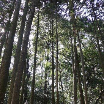 高くそびえる木々。