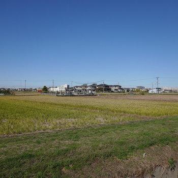 田んぼの中の農道を散策することができます。風と景色が気持ち良い〜。
