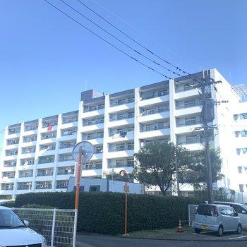 7階建てマンション。全部で4棟並んでいました。