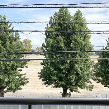 大きな楓の木が見えます♪