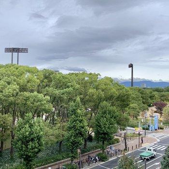 共有部】お部屋前の廊下からは長居公園がモロ見え!自然豊かですね