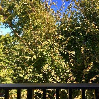 バルコニーからの眺望。