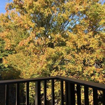 バルコニーの左奥からも大きな木が見えます。