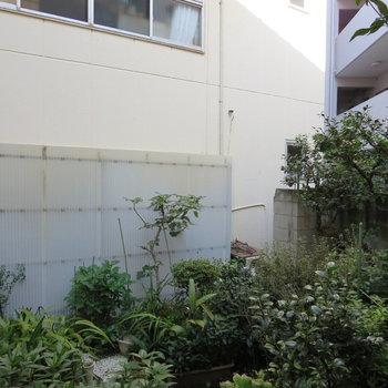 【LDK側】お隣さんのお庭が見えます