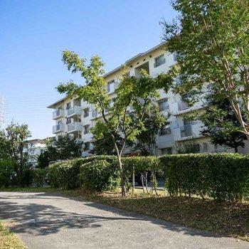 敷地内の遊歩道には、たくさんの果樹が植えられているのが特徴です。