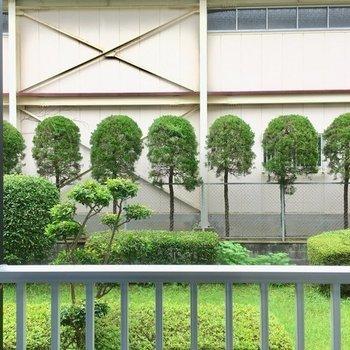お隣さんの壁だけど。緑もみえるからこのくらいがいい感じ。