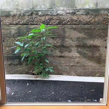窓からちょうど見える植物。