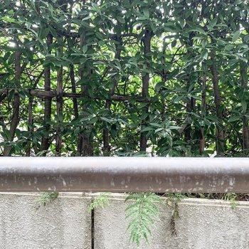 バルコニーの向かいは道路ですが、ちゃんと緑で目隠しされています。