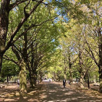【おまけ】私が訪れたときには、イチョウ並木が美しかったですよ