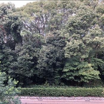 お隣の護国神社が廊下から見えます!マイナスイオンに癒やされる。