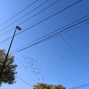 大濠公園近くだからか、鳥のさえずりや気持ちよさそうに飛ぶ群れが*
