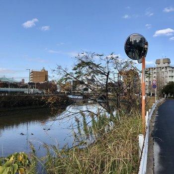 樋井川も流れていて、ちょうどワンちゃんたちがお散歩していました