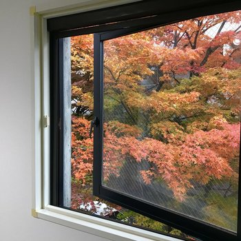 窓は開閉可能!紅葉を楽しめる窓もありました