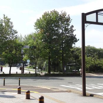 マンション出てすぐに舞鶴公園があります。
