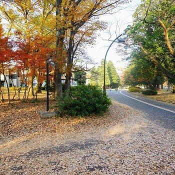 至近に駒沢公園が!!散歩♪