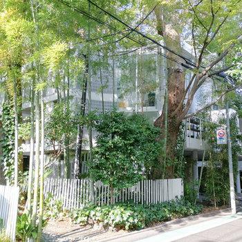 竹や木など、緑に囲まれた建物です。