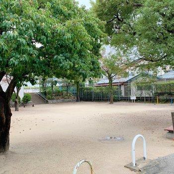 お隣が公園なのです。緑に溢れています。