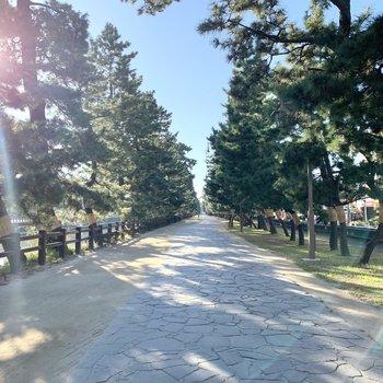 松並木で散歩やランニングもいいですね