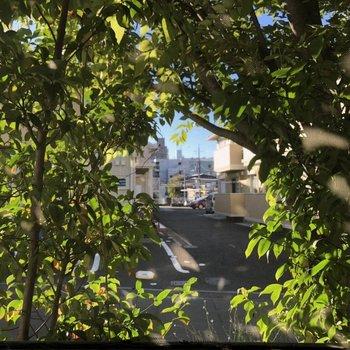 サンルームは道に面していますが、植物に囲まれているので外からはあまり見えませんでした。