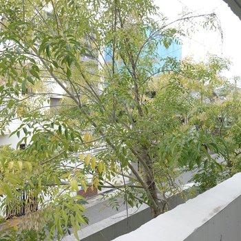 サイドの眺望は眼前、目一杯に広がる緑!葉っぱの色で、冬がもうすぐ近くまで来てるんだなぁと実感。