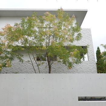 お部屋の窓から見えた木が。白壁に緑って嫌でも合うよね。