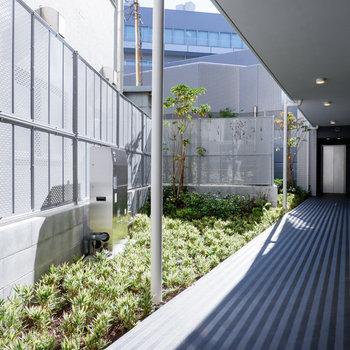 1階共用部には植栽が。