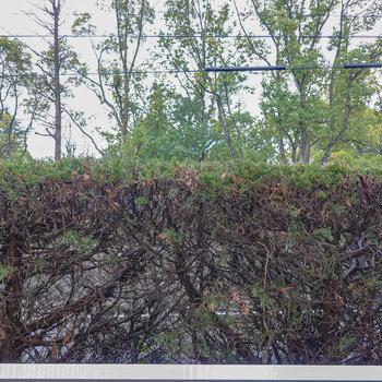 植栽で視線がカバーされているので、洗濯物も安心して干せそう。