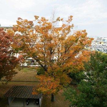 北側の窓からは、とても立派な木が見えました!