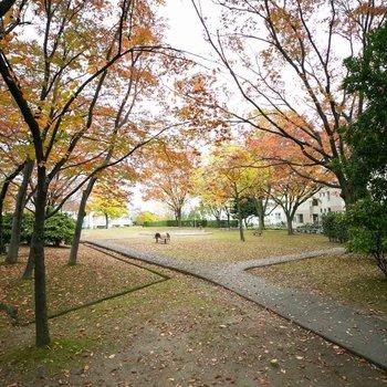 落ち葉が綺麗な公園や