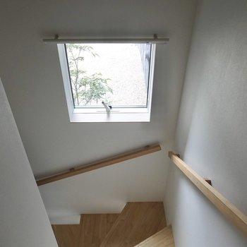 階段の小窓から、外の緑がちらりと見える。