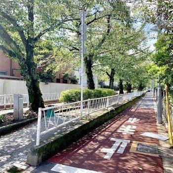 晴れた日にはプロムナードでお散歩。