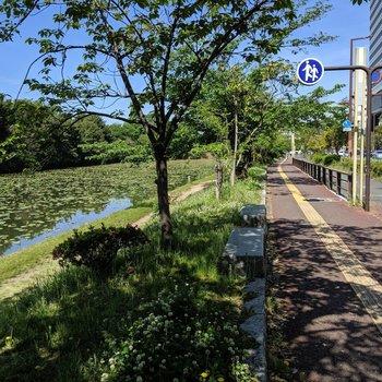 南側に歩くと舞鶴公園。夏は早起きして蓮を見に行きたい。