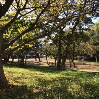 すぐそばにはこの公園。ぼーーっとしたくなりました。さらに横にはスイミングスクールも!