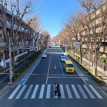 目の前の通りは道幅も広く、並木も綺麗でした。