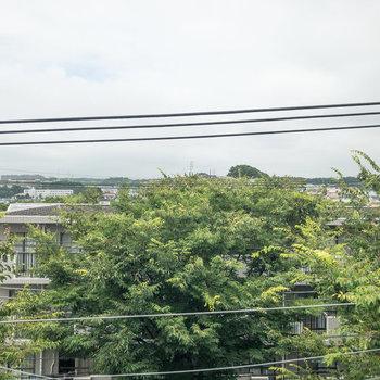 すぐ近くに木々が生い茂っています。