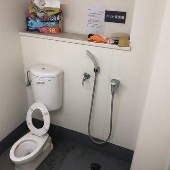 ペットの足洗い場もありましたよ。お散歩帰りはここで洗ってあげましょう。