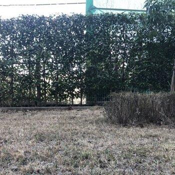 眺望は緑の植え込み。向こう側は学校のテニスコートでしたよ。