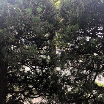 目の前の木のお陰で道路からお部屋が見えにくくなっています。